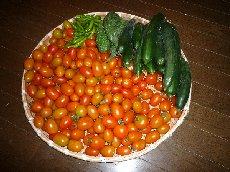 トマト 001a.jpg