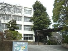 ヒマラヤスギ 018-1.jpg