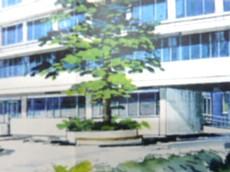 ヒマラヤスギイメージ004-1.jpg