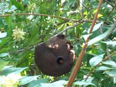 H21.5.7.23スズメ蜂の巣除去.jpg