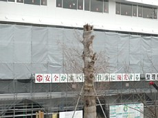 H22.2.9樹木 008-1.jpg