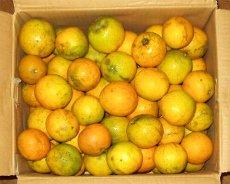 アメリカ産オレンジ