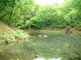 水辺 緑.jpg