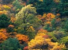 秋の山.jpg