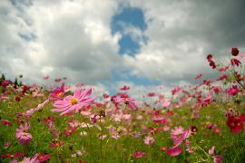 空とお花畑.jpg